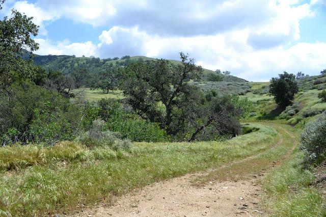 more oaks in grasslands