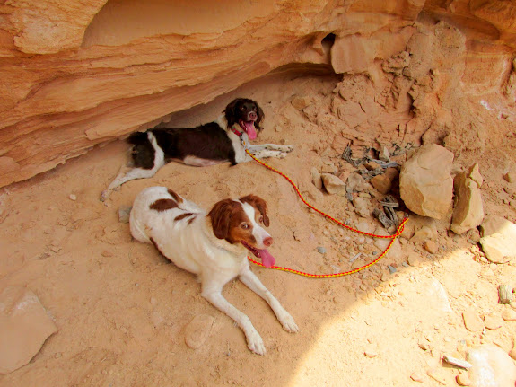 Boulder and Torrey in the shade while I explored an alcove