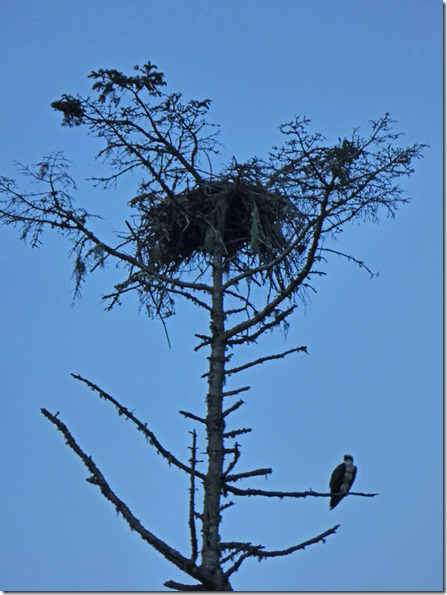 Osprey Nest, Huntley Park
