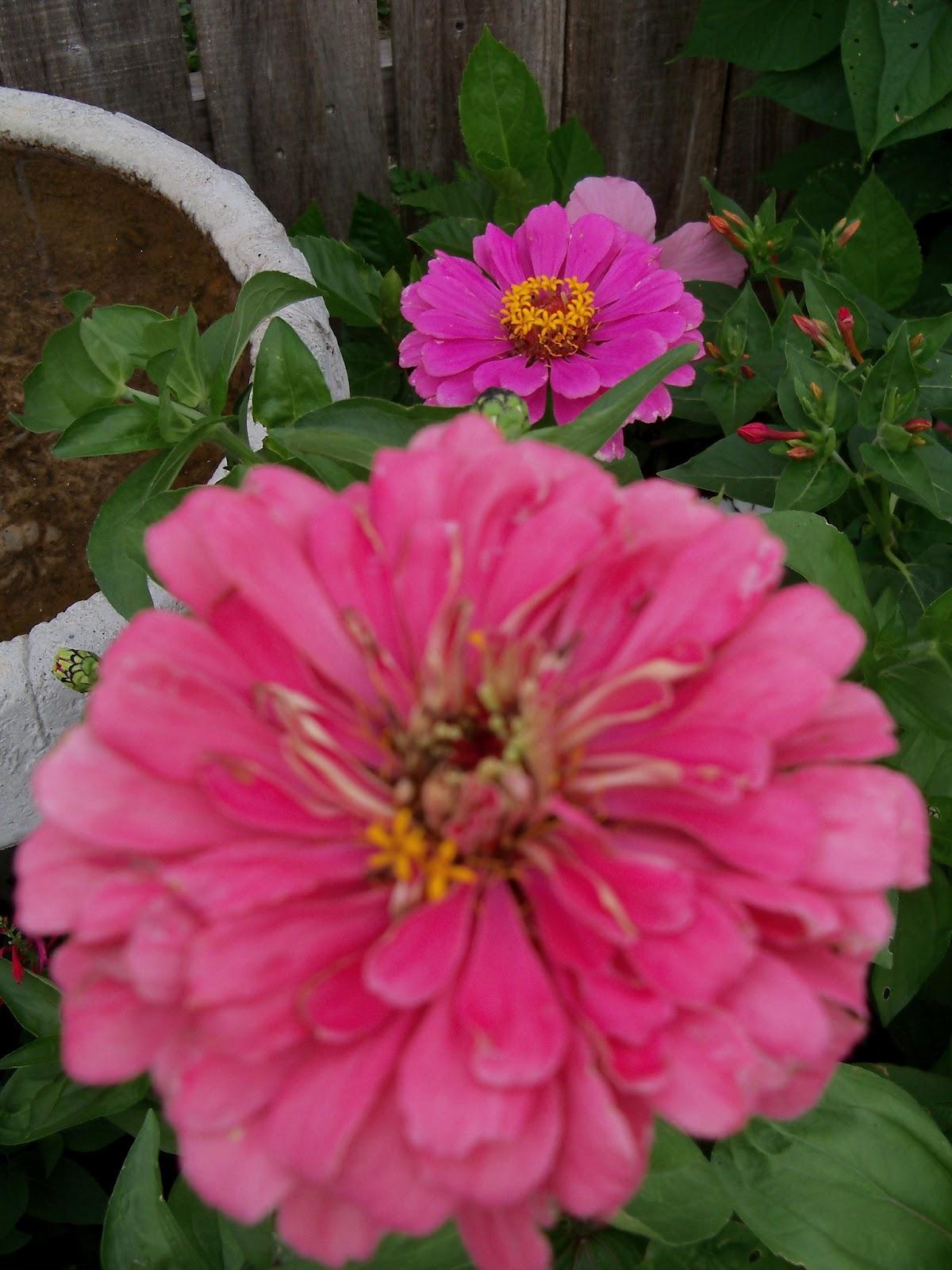 Gardening 2011 - 100_8107.JPG
