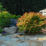 Beautiful japanese maples