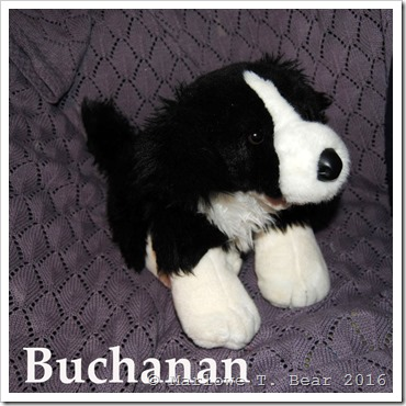 tn_2016-07-16 Buchanan (1)