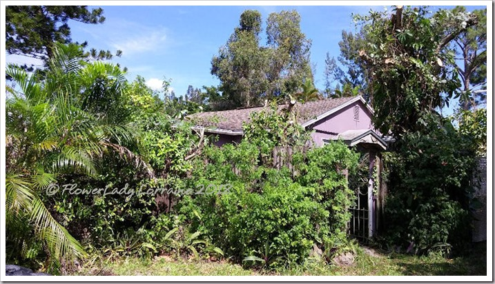08-23-plum-cottage
