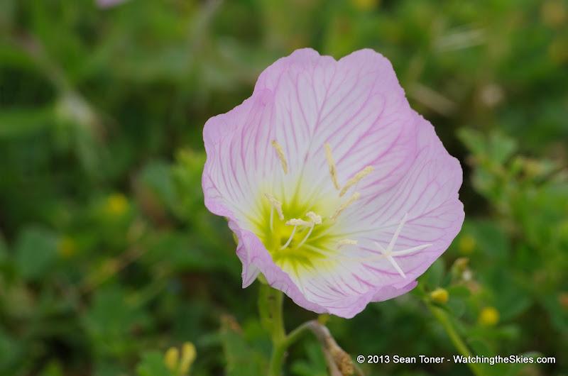 2013 Spring Flora & Fauna - IMGP6365.JPG