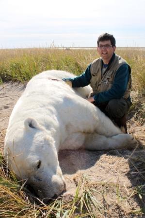 Urso pardo vs Urso polar Dr_lunn_polar_bear