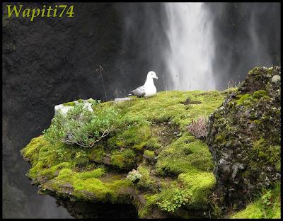 Un tour  d'Islande, au pays du feu... et des eaux. - Page 2 54-gorge