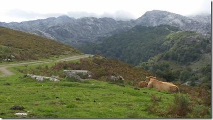 Picos_Covadonga_(12-9-2017) (12)