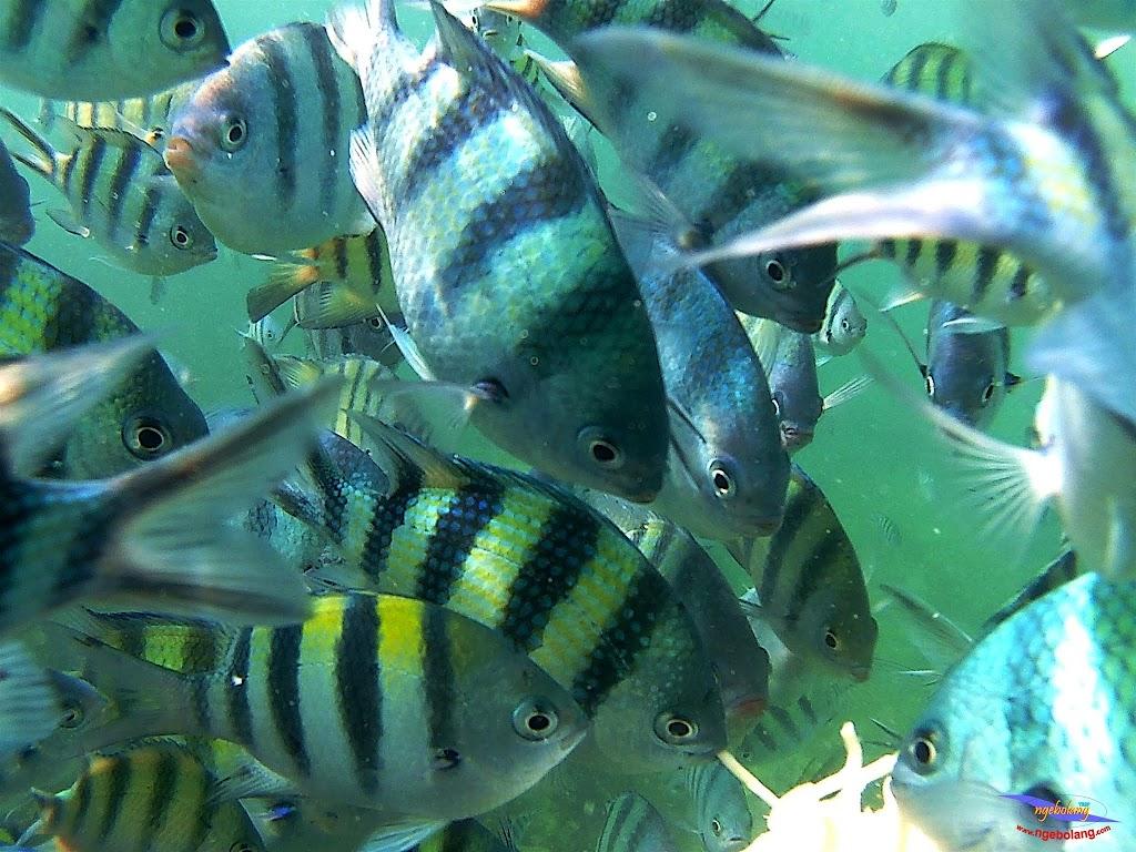 family trip pulau pari 140716 GoPro 49