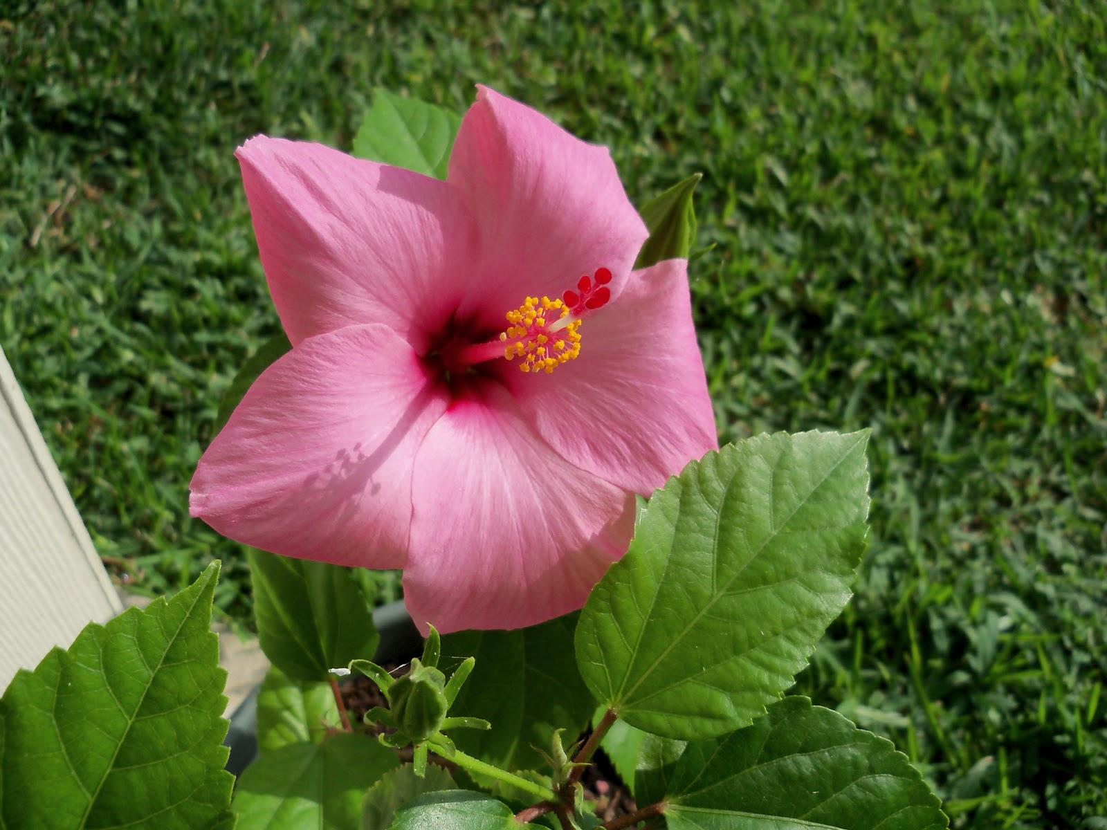 Gardening 2010, Part Two - 101_2340.JPG