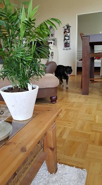 Molly u novom domu - 18194688_1560409197367162_5561352525913299588_n.jpg