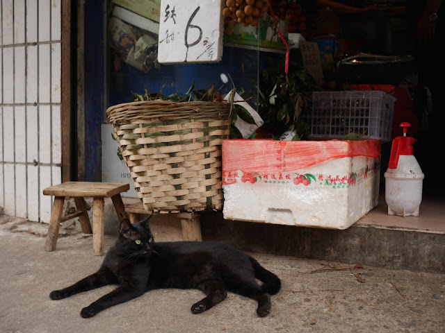 black cat in front of a basket and box of fruit in Changsha, Hunan, China
