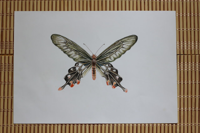 НЕбисерная лавка чудес: Мои карандашные рисунки