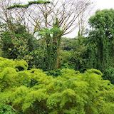 06-23-13 Big Island Waterfalls, Travel to Kauai - IMGP8824.JPG