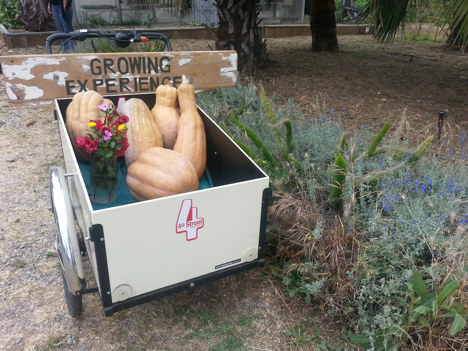 The Growing Experience Urban Farm