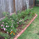 Gardening 2010, Part Two - 101_2133.JPG