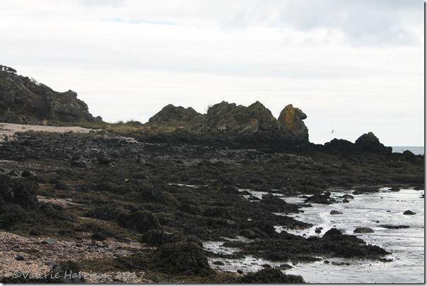 2-rough-island
