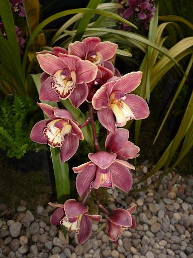 Orquideas de mi pais...Ecuador.
