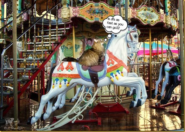 Matilda on carousel Memorial Day (©Bell Fur Zoo)