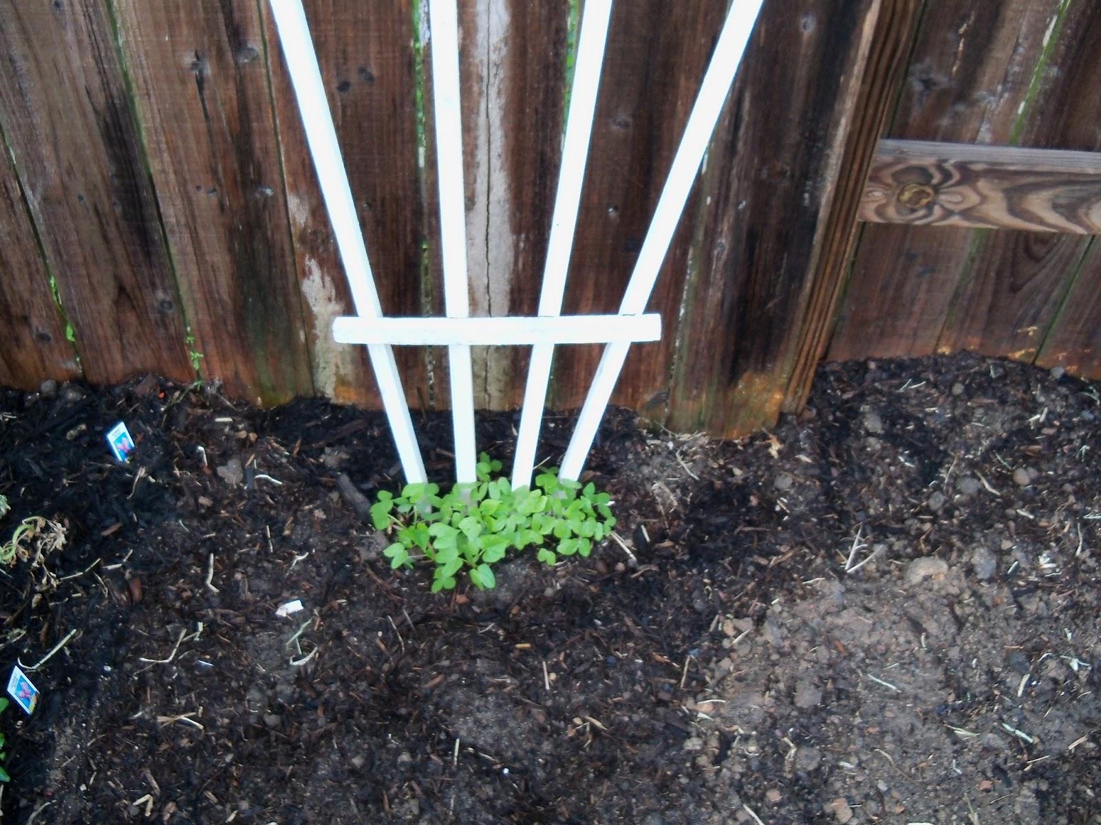 Gardening 2011 - 100_6729.JPG