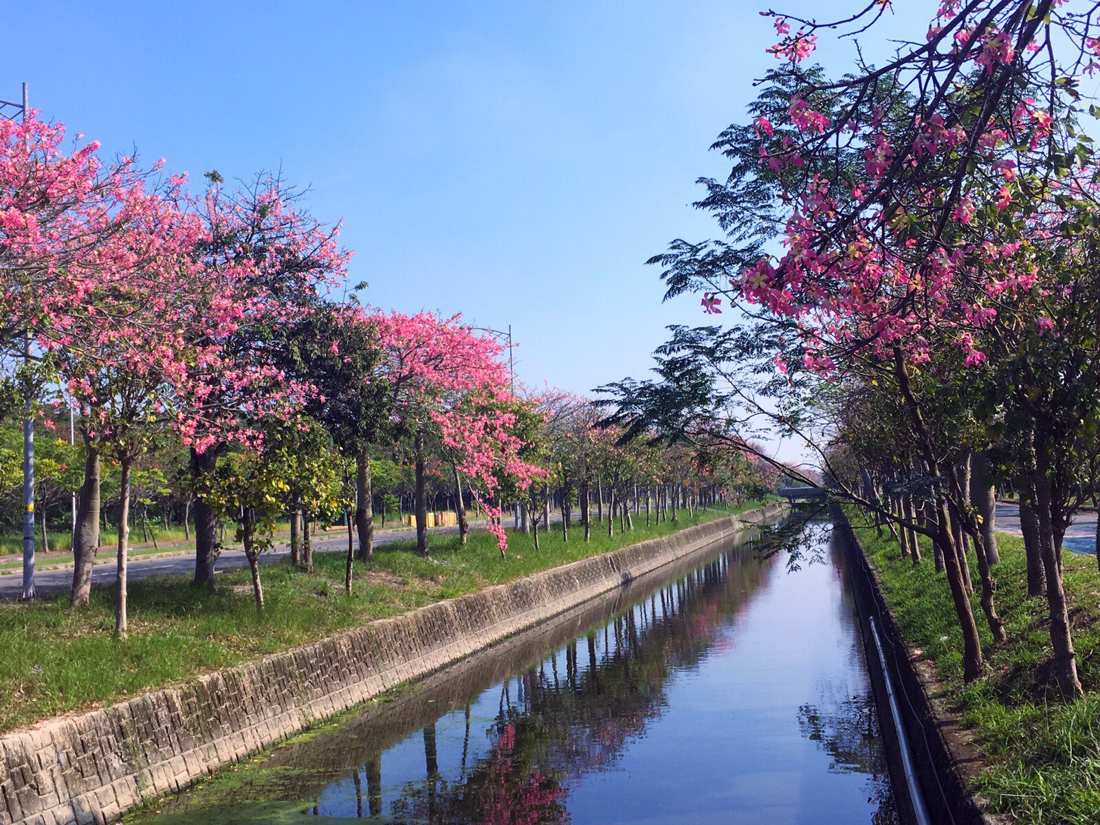 silk floss trees nobgbo park huwei yunlin taiwan