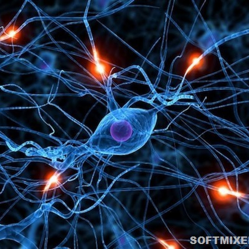 Странные теории о происхождении интеллекта