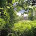 Belleek Wood, Ballina, Co. Mayo (Ireland)