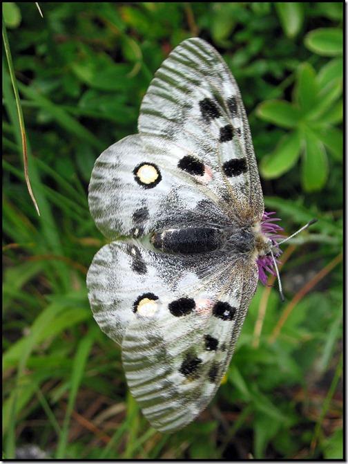 08-Moth
