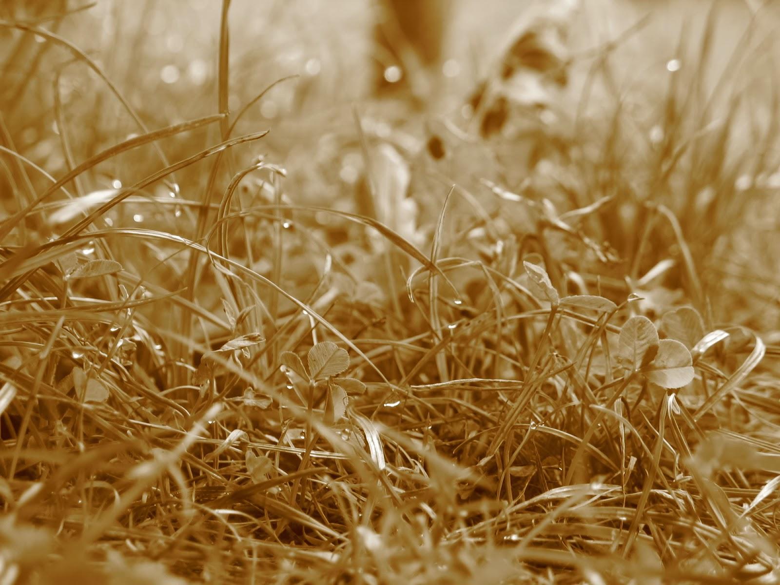 Taborjenje, Lahinja 2005 1. del - img_0863.jpg