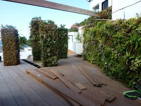 Mur et Pilier végétal à St Barth ( Caraîbes) Cette photo prise à l'hôtel TAIWANA à Flaman dont le propriétaire est Mr Jean-Paul