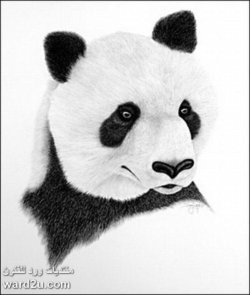 فنان امريكى يرسم باسنانه  Doug Landis