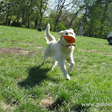 Frisbee- w końcu (25.04.2009r.)