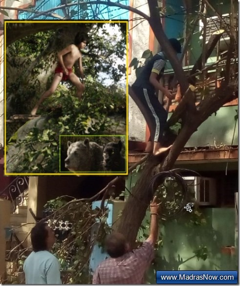 mowgli-bagheera-baloo-cyclone-vardah