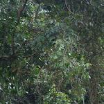 southamerica-2-122.jpg