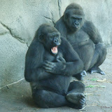 Pittsburgh Zoo Revisited - DSC05189.JPG