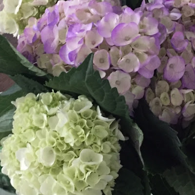 Preventing Wilt in Hydrangeas