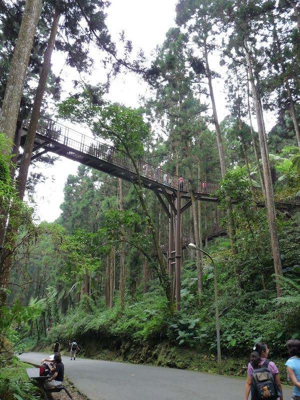 Taiwan.Chi Tou forest The Sky Walk, the only one of its kind in Taiwan
