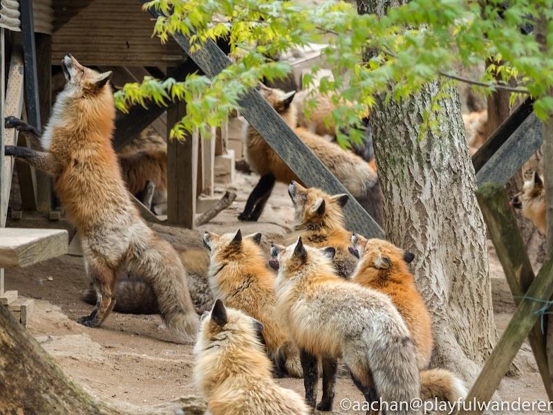 foxvil (29 - 70).jpg
