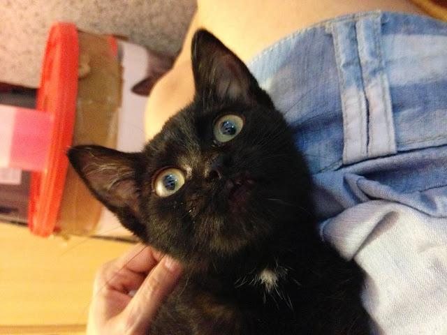 Yoko, la gata rescatada de la alcantarilla IMG_3933