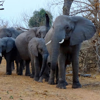 An elephant family wait for us to pass before crossing the road