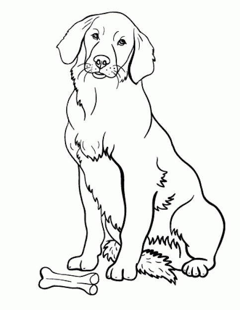 Free Printable Golden Retriever Coloring Pages Free Printable
