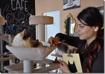 14 cat café 2