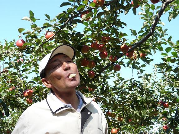 飯田さんとりんごの木