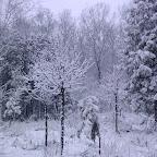 Зимняя уборка в Дендрарии 077.jpg