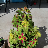 Gardening 2010, Part Three - 101_5039.JPG