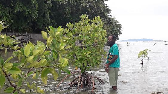 Sebaris Mangrove di Kota Ombak