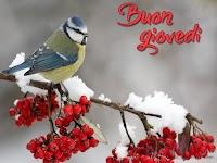 buon giovedi immagine con frase aforismo uccellino ramo fiori.jpg