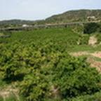 tn_portugal2010_302.jpg