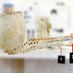 Centre d'Interprétation du Patrimoine : pipe en terre - modèle croche à grènetis, Gambier, 19e s.