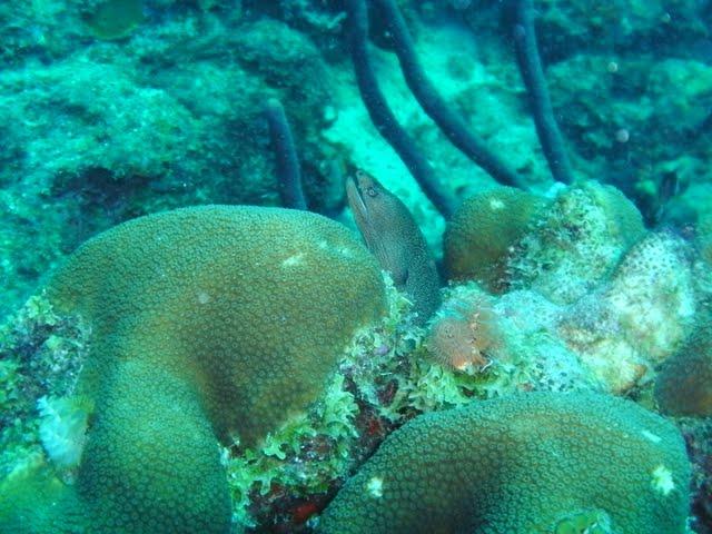 Bonaire 2011 - PICT0206.JPG