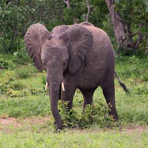 Elephant Baby, Botswana